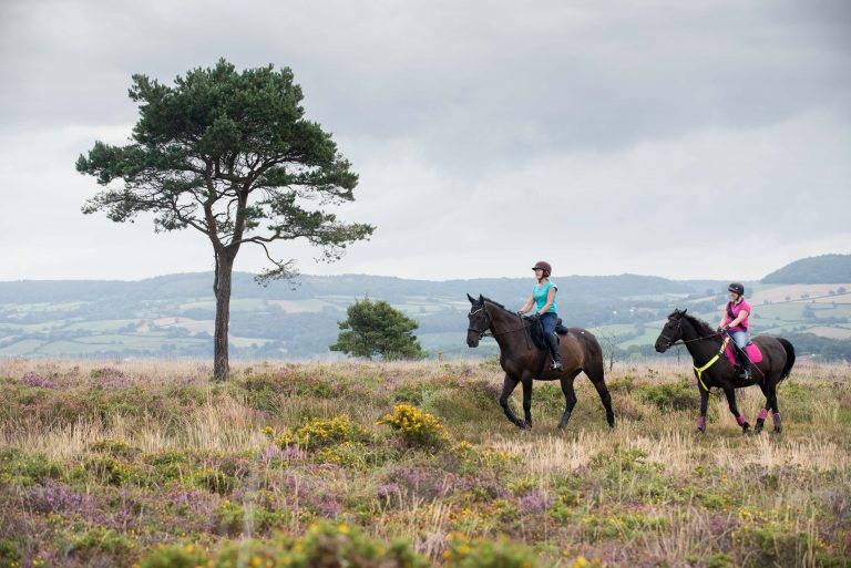 horse riders on the East Devon Pebblebed Heaths