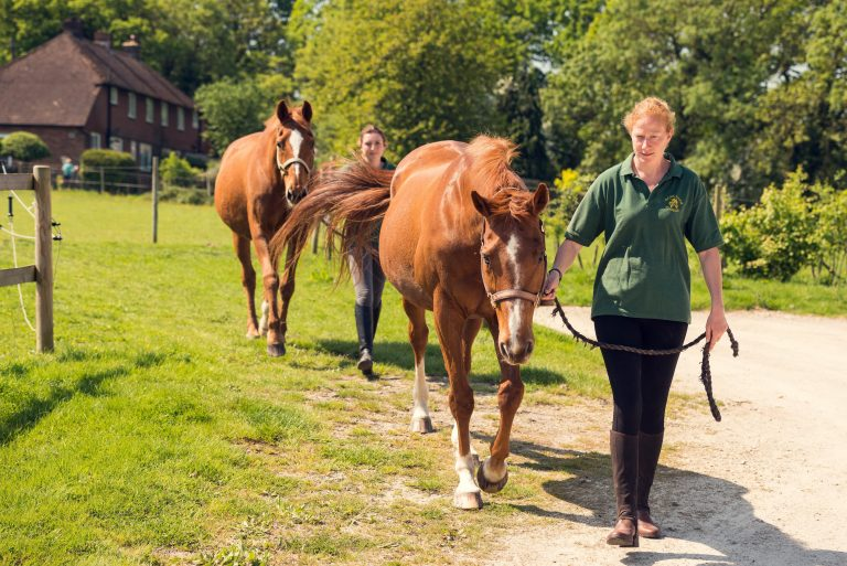 Horses being led at Bank Farm by Jeanette Gibb, Livery Yard Manager